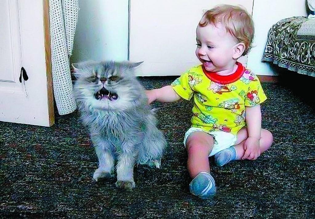 Смешные картинки про животных с надписями для детей, ангел