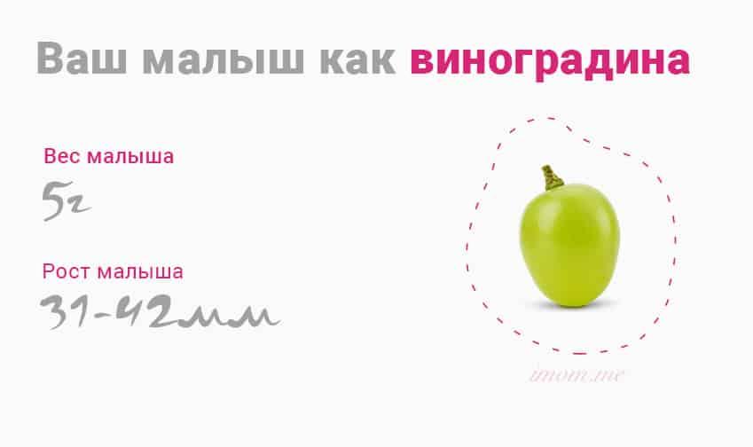 10 неделя беременности размер плода