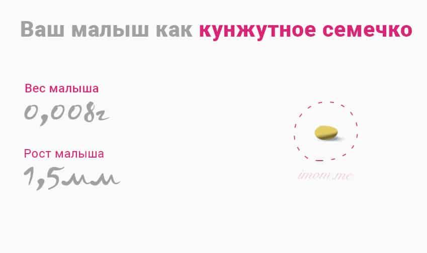 5 недель беременности какой фрукт