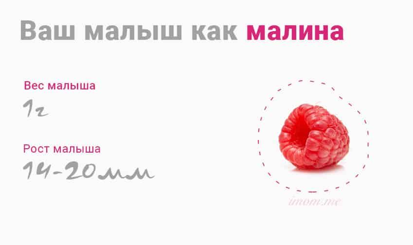 8 недель беременности эмбрион
