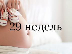 29_nedelya_beremennost