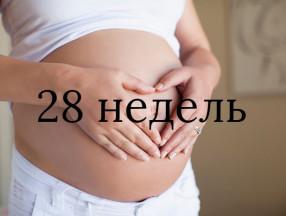 28_nedelya_beremennost