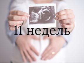 беременность 11 недель