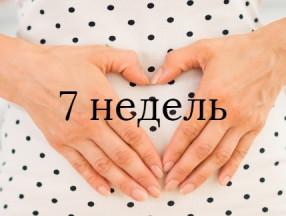 7_nedel_beremennosti