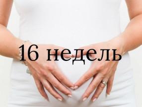 16_nedelya_beremennosti