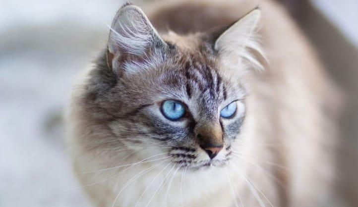 ohos azules