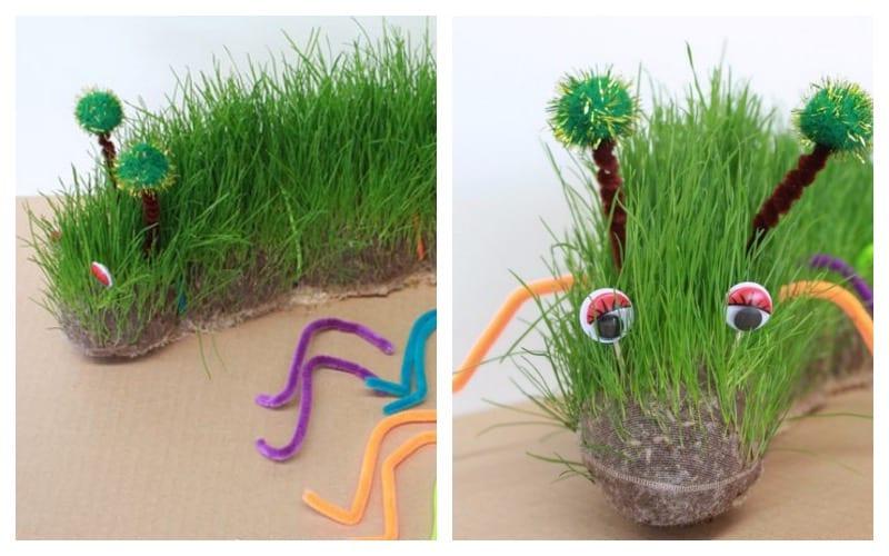 Как вырастить травянчика — Цветок домашний