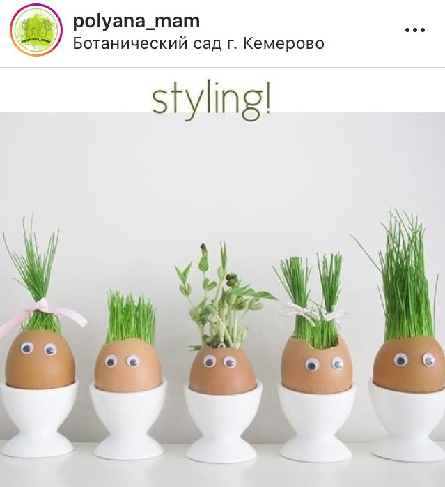 Travyanchik_v_skorlupe_svoimi_rukami